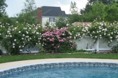 Poolside Fencing and Rose Garden