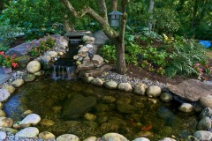 A Koi Pond is fun and exotic.