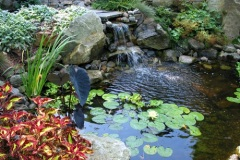 Added Brilliant Aquatic Color to New Pond