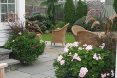 Patio and Plantings